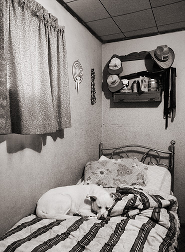 A big white dog sleeping on an old brass bed at grandpa's house. A gun rack with a cowboy hat and some old baseball caps hangs above the bed.