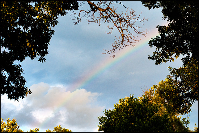 A rainbow in the sky framed by trees in the golden light in the early evening.