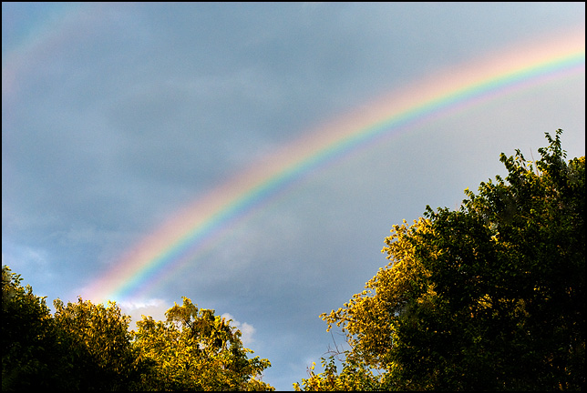 A double rainbow in a dark sky between two trees in the early evening.