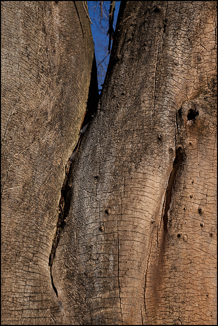 Closeup photograph of a split tree trunk with no bark.