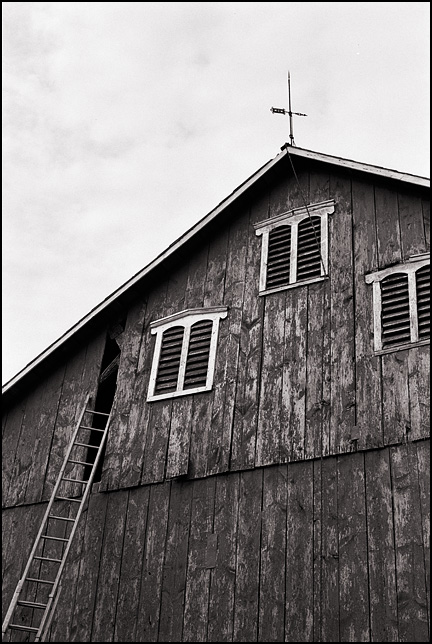 A Tall Ladder Reaches Up To Hole In The Siding Of An Old Barn On