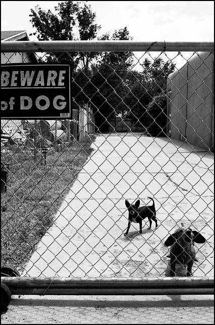 Two tiny little dogs bark from behind a chain link fence with a Beware of Dogs sign in Santa Fe, New Mexico.