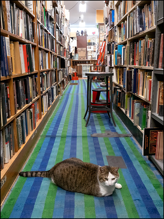 Sherlock, the fat bookstore cat at Hyde Brothers Books in Fort Wayne, Indiana. He is laying in the middle of one of the store's aisles with an annoyed look on his face.