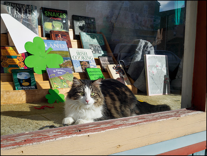 A bookstore cat looks out at me through the front window at Hyde Brothers Books in Fort Wayne, Indiana.