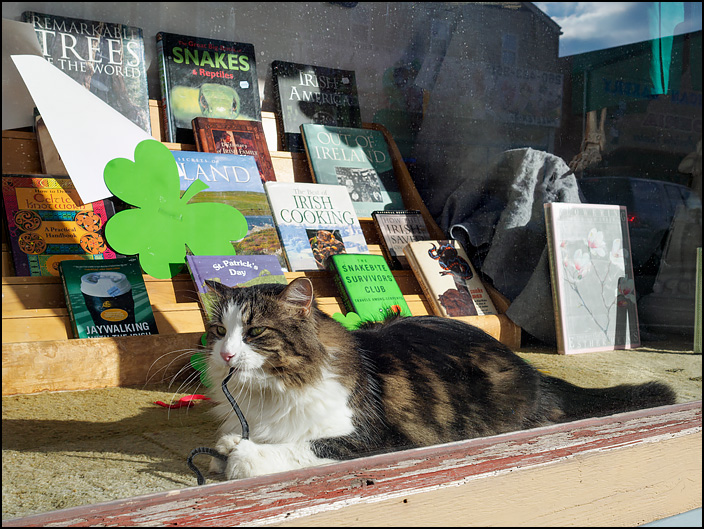 A bookstore cat in the front window at Hyde Brothers Books in Fort Wayne, Indiana. She is playing with a rubber snake in front of a display of books about Ireland on sale for Saint Patricks Day.