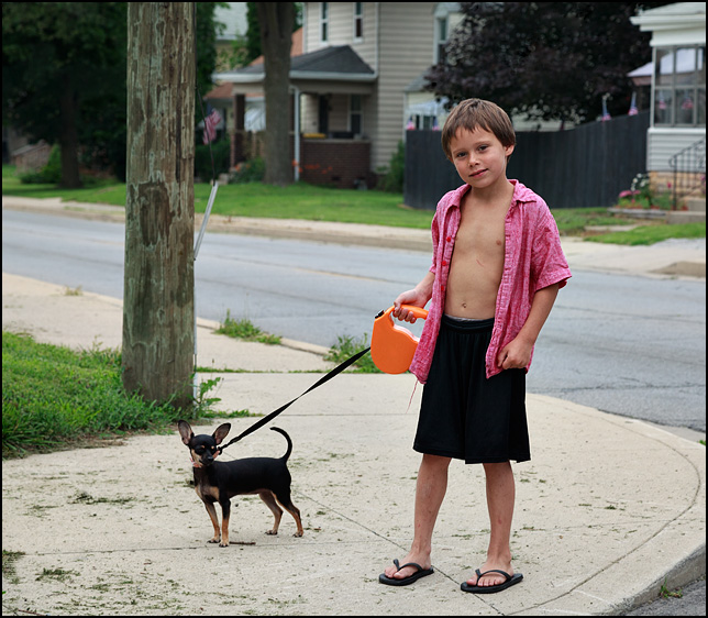 A young boy walking his tiny black chihuahua.