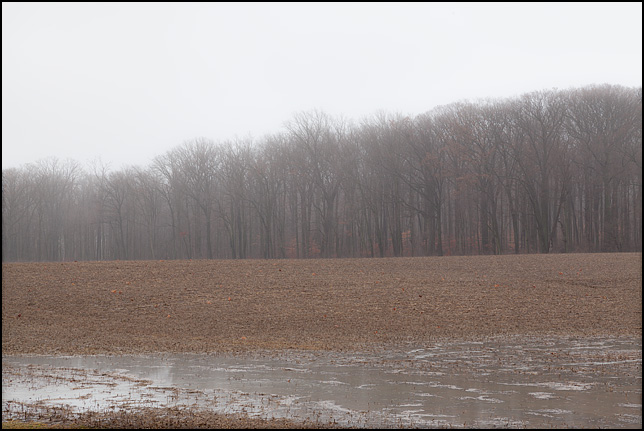 A waterlogged field on a rainy January morning. The field is on Branstrator Road in rural Allen County, Indiana.