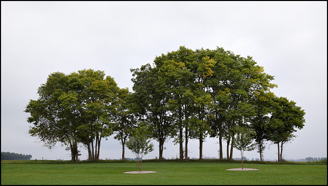A line of trees on a hazy morning at Brooke Acres, a huge park-like property surrounded by soybean fields, on Knouse Road in rural Allen County, Indiana. Two smaller trees stand in front of the larger group.