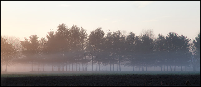 Fog shrouds a line of trees along the edge of a field on a farm on Bruick Road in Allen County, Indiana.