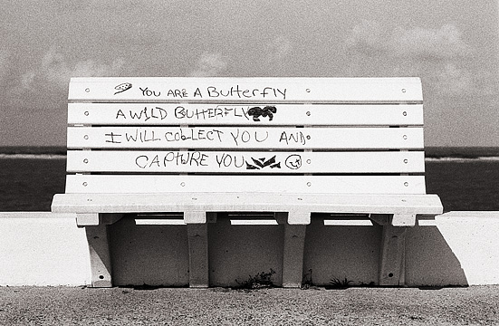 A bench along the waterfront in Corpus Christi with graffiti of the lyrics to the song Obsession by the Sugababes painted on it. You are a butterfly, a wild butterfly. I will collect you and capture you.
