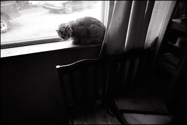 Grandpa's old cat sits in the window of his house looking down at a couple of old wooden chairs.