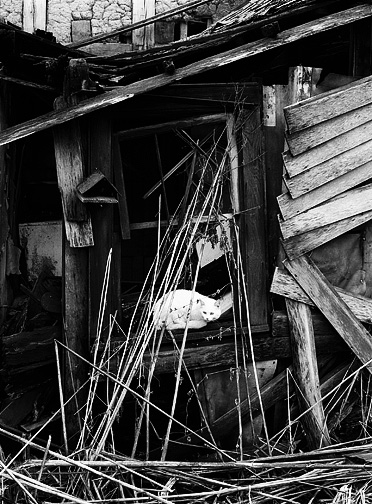 A white cat sitting under an old birdhouse in the broken window of a dilapidated farmhouse in Allen County, Indiana. Mud was used for insulation and is visible where the siding has fallen off.