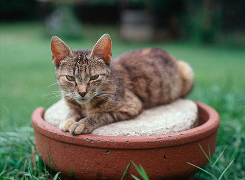 A mean looking old cat with a weary look on her face sits on top of a sewer tile.