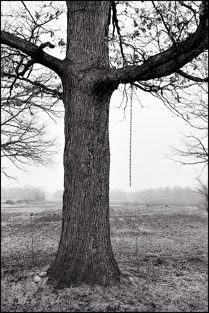 A tree with a chain hanging from a branch stands on the edge of a field on a foggy morning in Fort Wayne, Indiana.