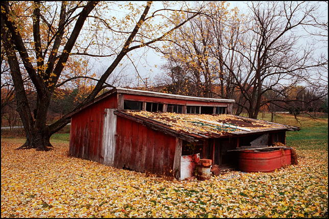 An abandoned red barn chicken coop under a tree surrounded by fall leaves.