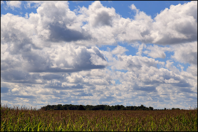 White fluffy clouds fill the blue sky over a cornfield on a sunny September day on the south side of Pleasant Center Road in rural Allen County, Indiana.