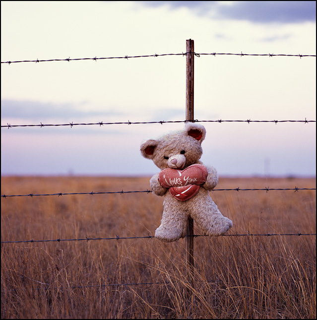A teddy bear tied to a barbed wire fence along US-285 north of Artesia, New Mexico. It is part of a roadside memorial to someone who died in an auto accident on the highway. The bear is holding a heart that says I Love you.