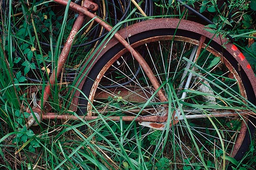 A rusty old bicycle laying on a junk pile overgrown with tall grass and weeds behind my grandfather's house in rural Indiana.