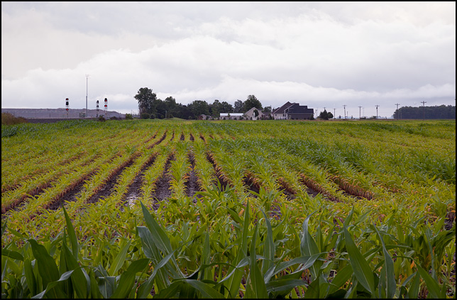A cornfield on a stormy rainy evening on Dawkins Road in rural Allen County, Indiana. A house and railroad signals are visible in the background.