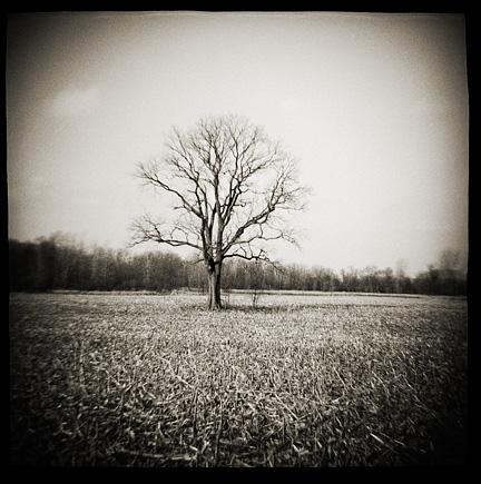 Lonely tree in the middle of a cornfield in rural Allen County, Indiana, photographed with a Diana toy camera.