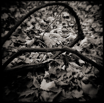 Vines curled into two loops, surrounded by dead leaves on the forest floor, photographed with a Diana toy camera.