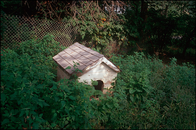 An old abandoned doghouse overgrown by weeds in my grandfathers back yard.