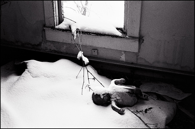 Snow covers the face of an old baby doll that looks like a corpse on the floor of an abandoned house.