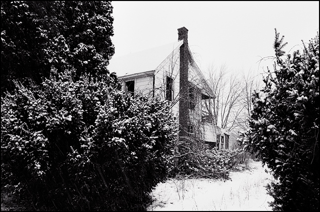 An abandoned house hidden behind tall evergreen bushes covered in snow during a winter storm.