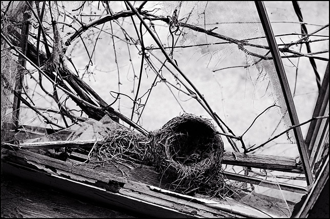 An empty bird nest on the windowsill of a broken window in an abandoned house.