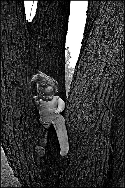 A torn up broken doll with a missing leg sits in a tree on an abandoned lot.