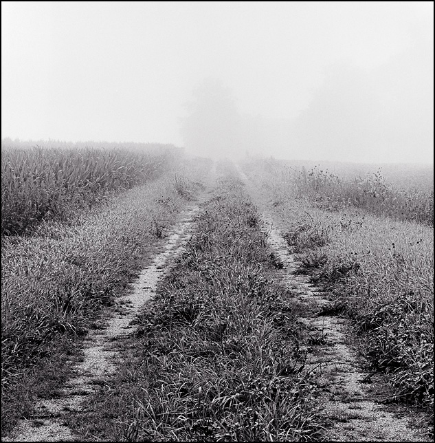 A long gravel driveway runs through a cornfield to an abandoned farmhouse on a very foggy morning in rural Indiana.