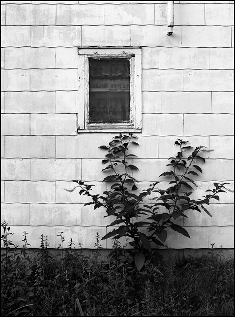 Tall weeds grow under the window of an abandoned house on Engle Road just west of Ardmore Avenue.