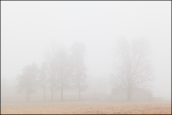 A house and a row of pine trees behind a veil of dense fog on a rainy January afternoon on Lower Huntington Road in rural Allen County, Indiana.