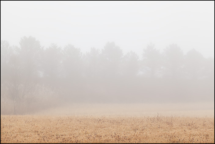 A row of pine trees atop a long hill behind a veil of dense fog on a rainy January afternoon on Lower Huntington Road in rural Allen County, Indiana.