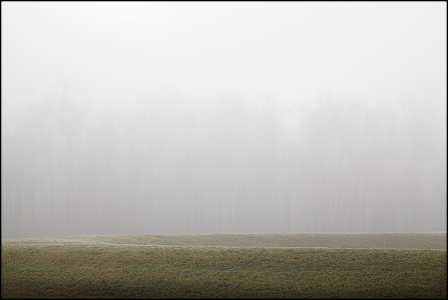 A line of trees veiled in fog behind a green grassy embankment on a December morning in rural Allen County, Indiana.