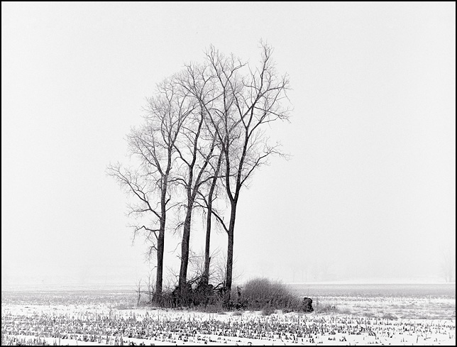 A snowy cornfield with a group of trees shrouded in winter fog on Yohne Road in rural Allen County, Indiana near the National Serv-All Landfill.