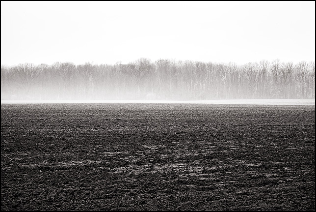 Early morning fog on the edge of a field in rural Indiana.