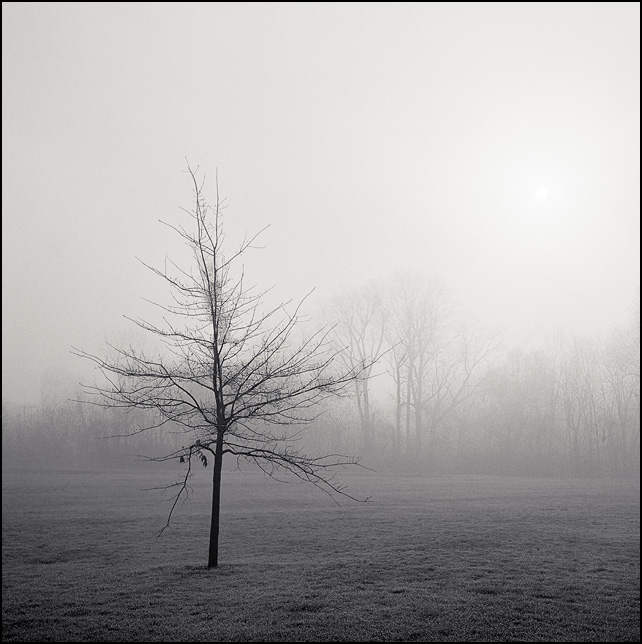The early morning sun pierces the veil of fog above a lone tree in an urban park in Fort Wayne, Indiana.