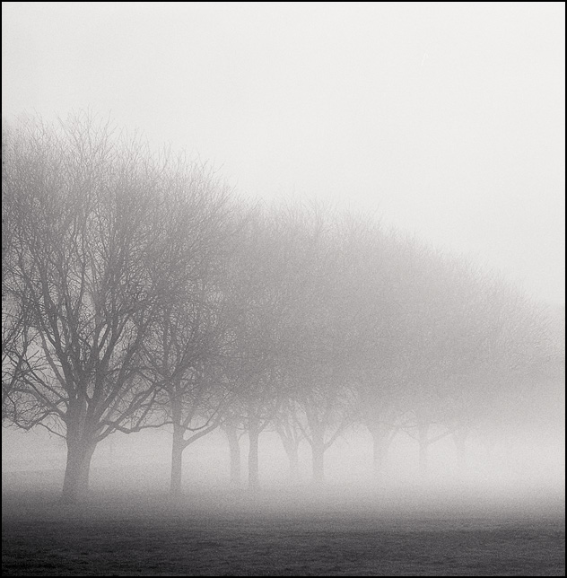 A line of barren trees disappearing in a thick fog in early morning.