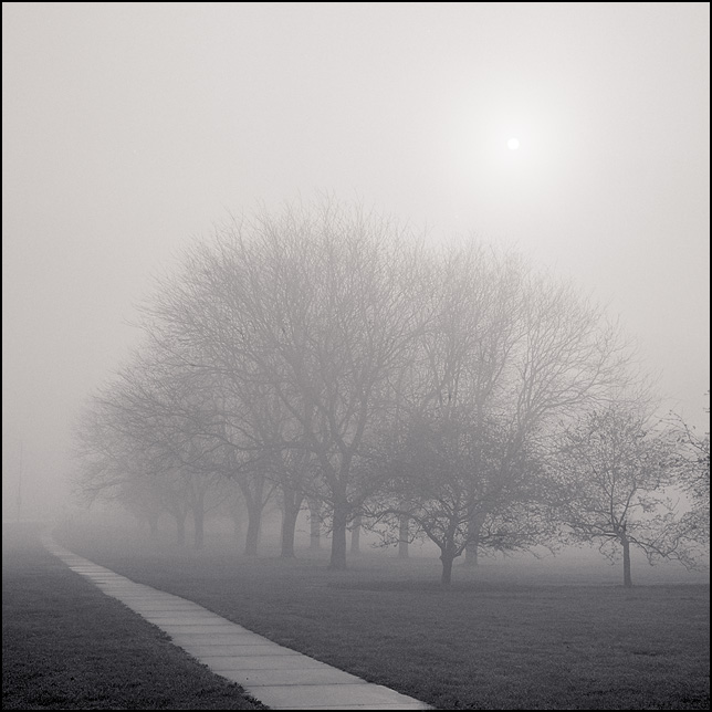 A paved trail along a line of trees leads into the dense fog at sunrise in a park in Fort Wayne, Indiana.