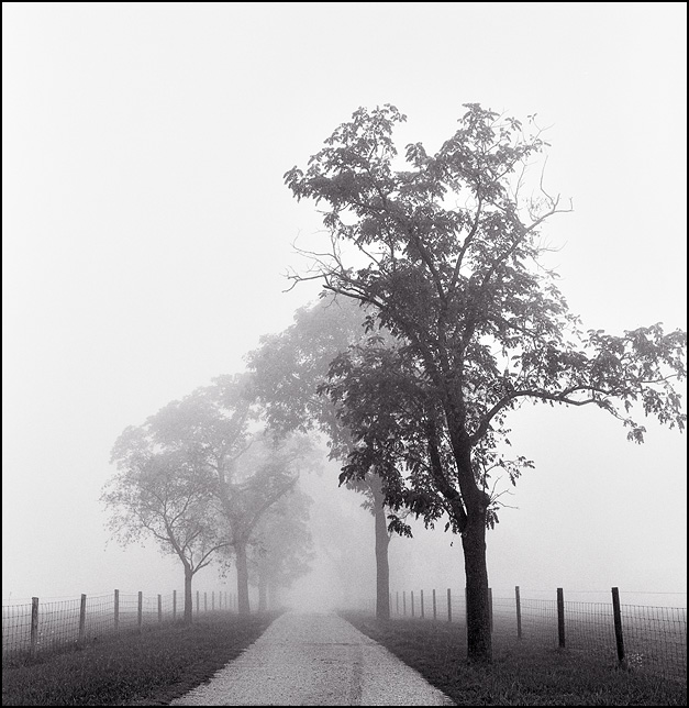 A tree-lined gravel driveway through heavy fog on a farm in rural Allen County, Indiana.