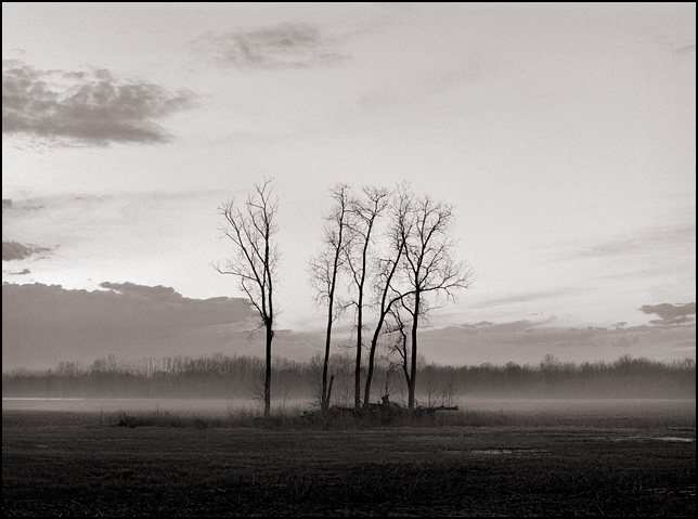 Four trees stand together in a foggy field at sunset near the National Serv-All Landfill along Yohne Road in Allen County, Indiana.