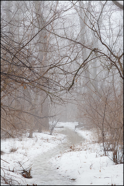 A winding trail through a snow-covered forest on a foggy rainy morning at Foster Park in Fort Wayne, Indiana.
