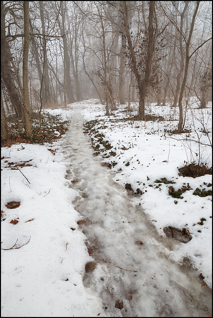 An icy watery trail through a foggy forest at Foster Park in Fort Wayne, Indiana.