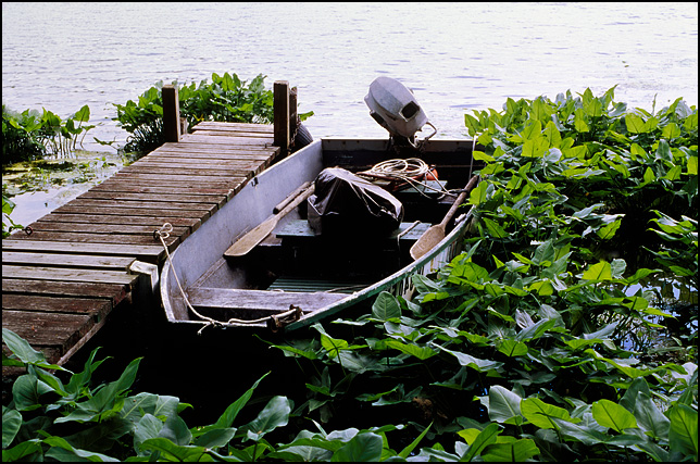 A rowboat moored to an old weathered pier, surrounded by thick aquatic plants, on Goose Lake in Whitley County, Indiana.