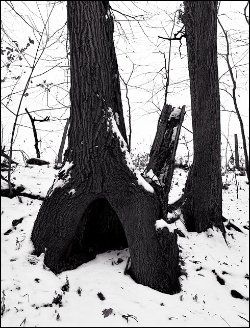 A place to hide inside the hollow trunk of a tree.