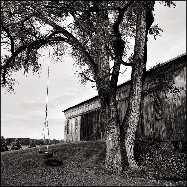 A tire swing hangs from a tree in front of a barn on a hill on County Road 1100N in rural Huntington County, Indiana. There is a tree face on the front of the large tree that holds the swing.