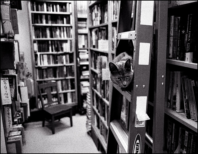 A cat sitting on a ladder in front of a bookshelf at Hyde Brothers Bookstore on Wells Street in Fort Wayne.
