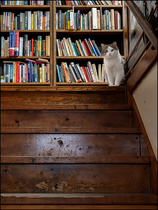 A bookstore cat at the top of the stairs at Hyde Brothers Books in Fort Wayne, Indiana.