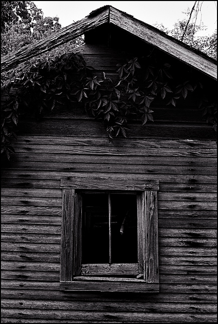 Vines cover a little shed with weathered wood siding on an abandoned farm in Allen County, Indiana. A broken window faces out from the side of the little shack.
